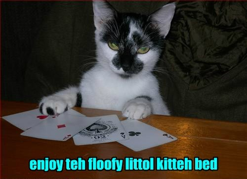 cards gamble Cats win - 8418459392