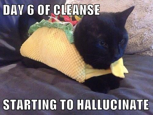 hungry,taco,Cats,black cat