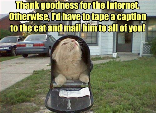 lolcat caption Cats mail - 8418501376