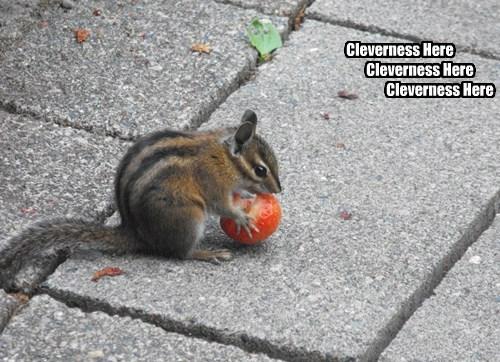Cheezburger Image 8418515968