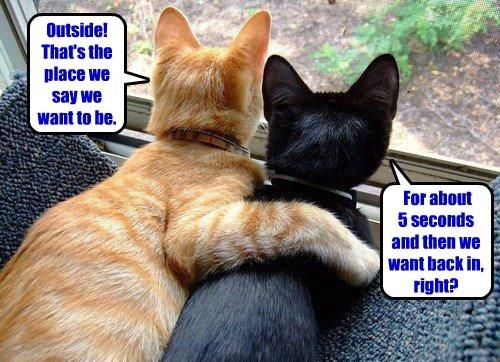 captions Cats funny - 8418526976