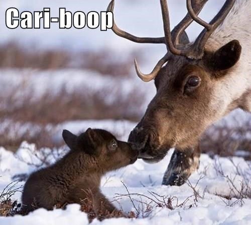 baby animals,boop,caribou