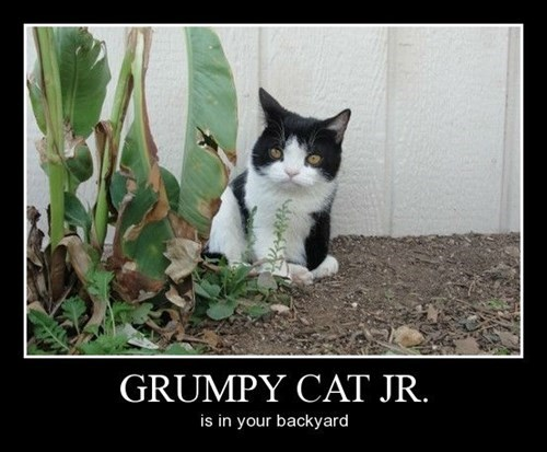 Cats,backyard,grumpy,funny