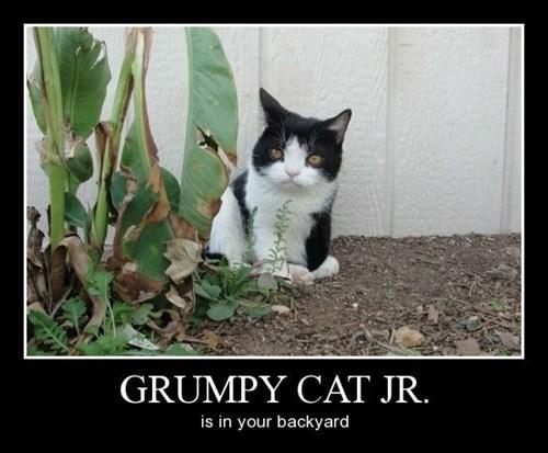 Cats backyard grumpy funny - 8418890240