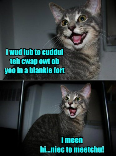 cute cuddling caption fort Cats funny - 8419094016