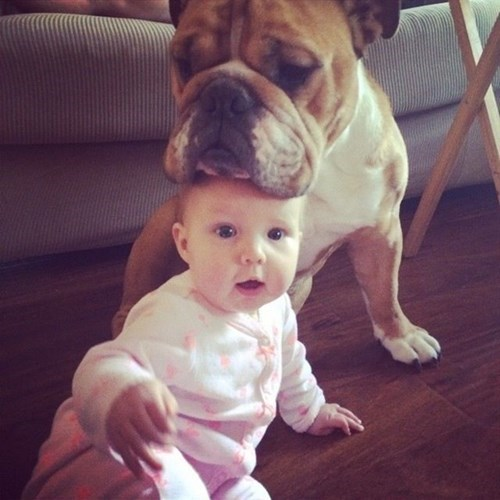 dogs baby parenting - 8419134720
