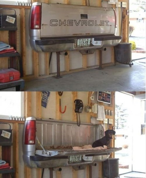 dogs trucks - 8419266560