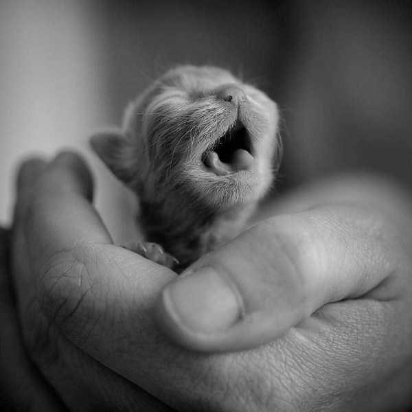 animal photos amazing photos Photo - 8419333
