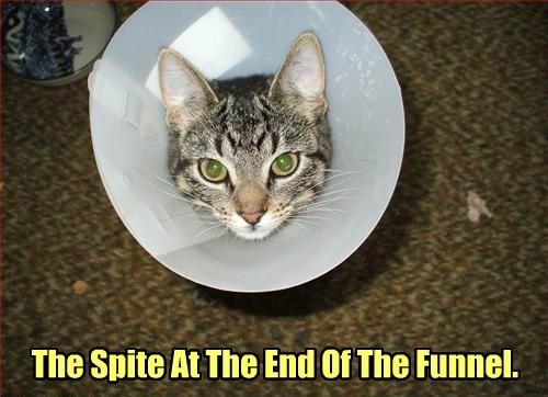 captions Cats funny - 8419346432