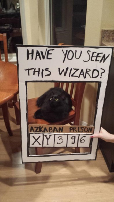 Harry Potter cute Cats - 8419505664