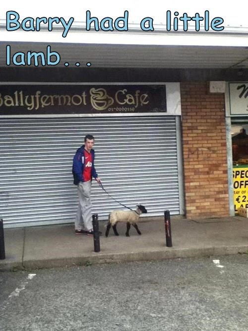 Barry had a little lamb...