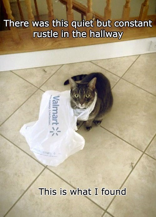 what is that stuck plastic bag Cats - 8419970816