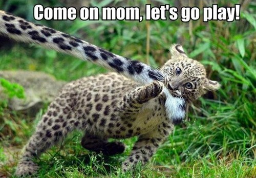 leopard,tail,parenting,mom