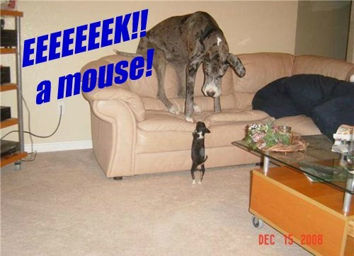 dogs eek caption mouse