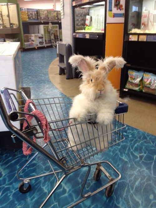 happy bunday shopping cart bunny