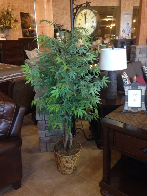 plants weed funny store - 8420129536
