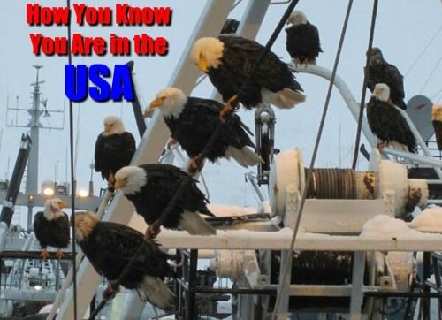 eagle usa america - 8420143872