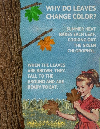 brown,colors,leaves,funny,Fake Science