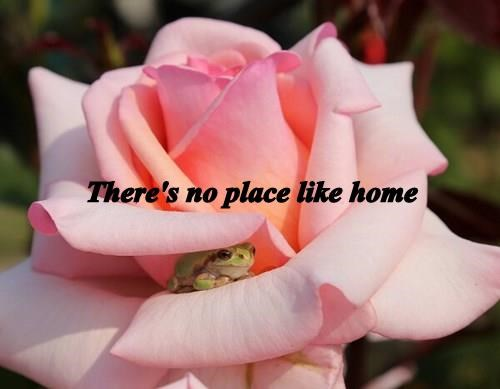 animals home frog Flower rose - 8420608768