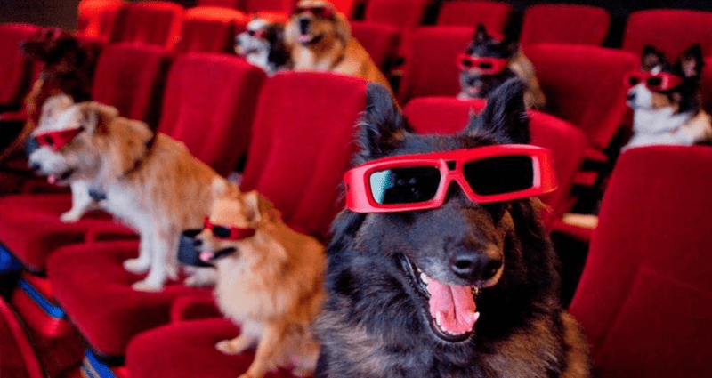 cool dogs plato texas cute wine k9 cinema - 8420613
