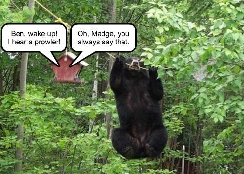bears birdhouse prowler - 8420614400