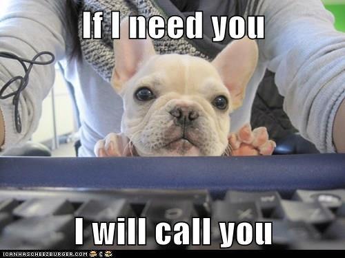 animals - 8420762624