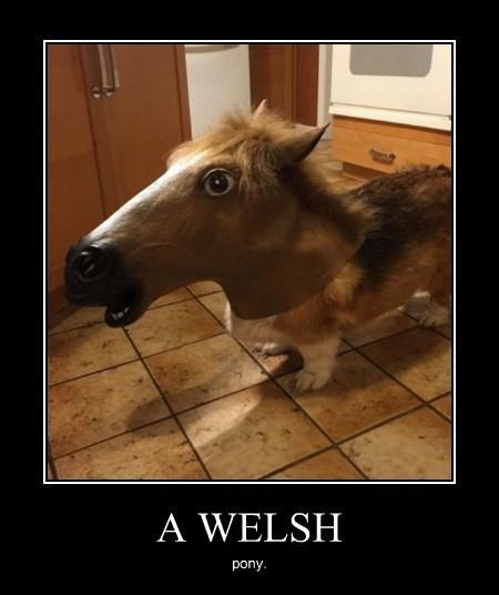 wtf pony corgi funny - 8420975104