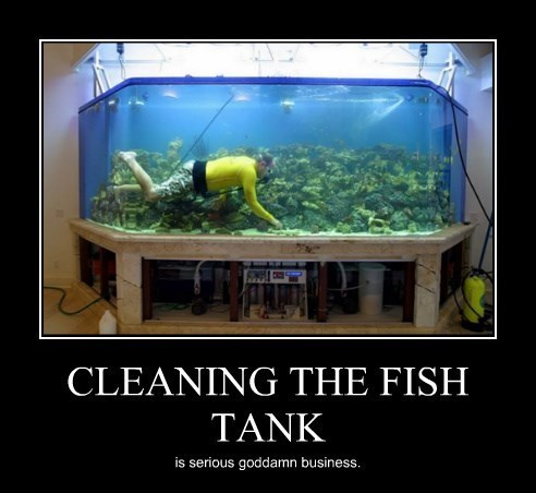 serious business,wtf,ocean,fish tank,funny