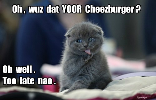 your cheezburger cat too late caption - 8420992512