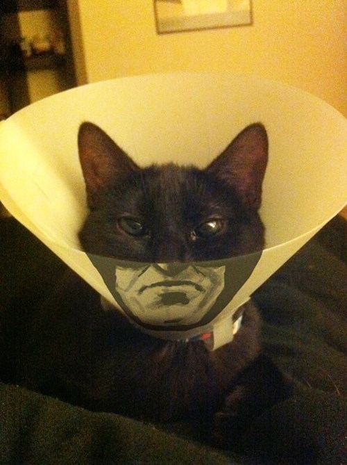 cone of shame batman Cats - 8420998656