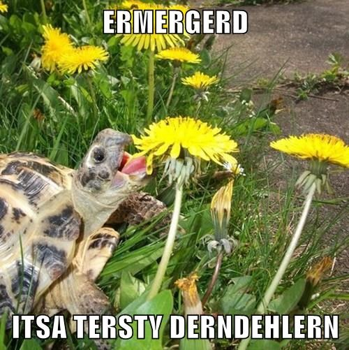 animals Ermahgerd turtle noms