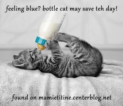feeling blue? bottle cat may save teh day!  found on mamietitine.centerblog.net