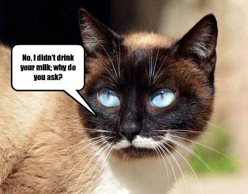 captions Cats funny - 8421211904