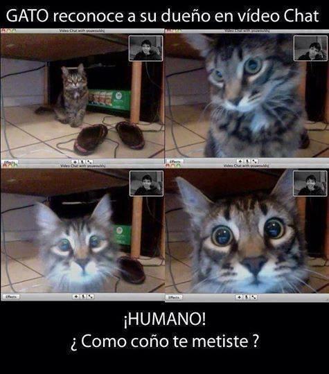 gatos bromas Memes animales - 8421771776