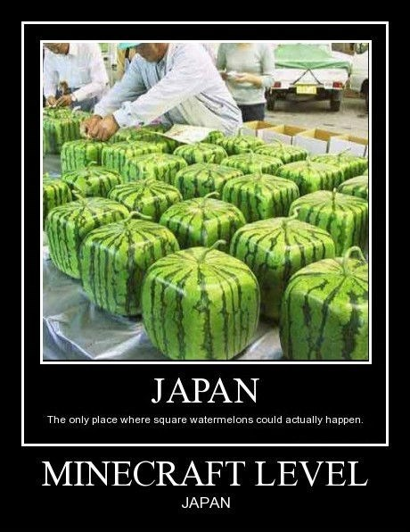 wtf watermelons Japan funny - 8421824768