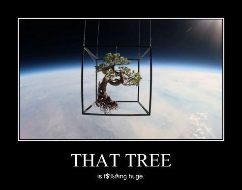 wtf tree huge funny - 8421826304