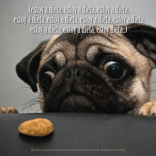 bromas perros Memes animales - 8421927424