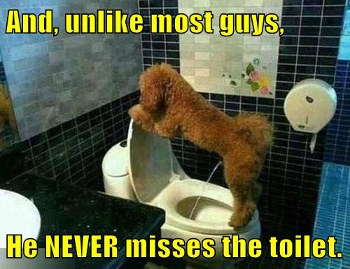 animals dogs pee toilet trick