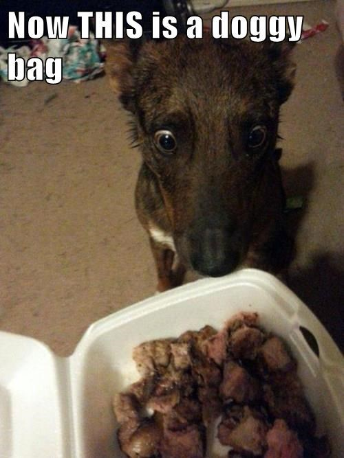 animals doggy bag captions - 8422130944