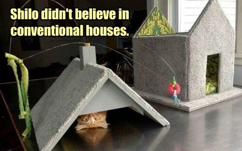 Cats house wtf tabby - 8422345728