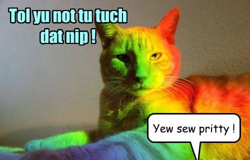 Cats nip rainbow - 8422353920