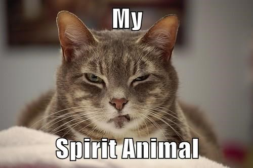 animals Cats nope spirit animal - 8422382592