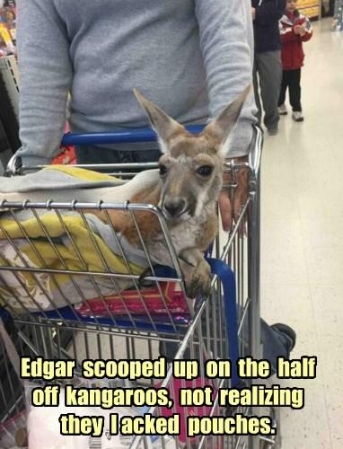 baby animals kangaroo sale - 8422536960