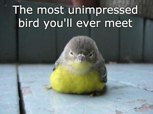 birds unimpressed grumpy - 8422551808