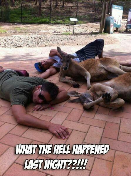 wtf drunk australia funny - 8422569984