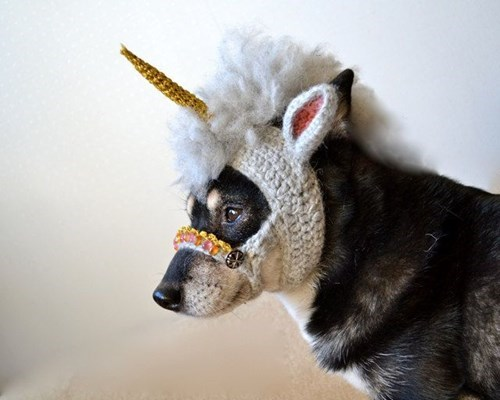 crochet unicorn dogs - 8422627584