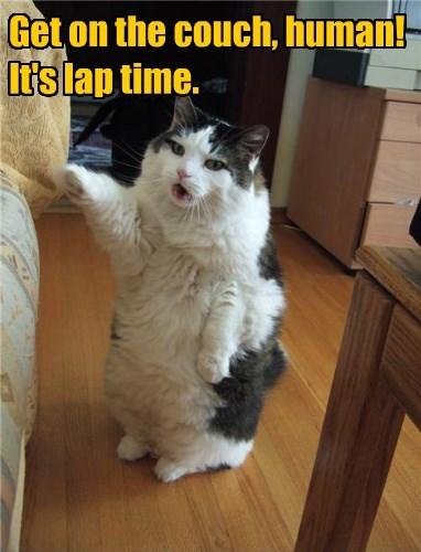 lap captions Cats funny - 8422648576