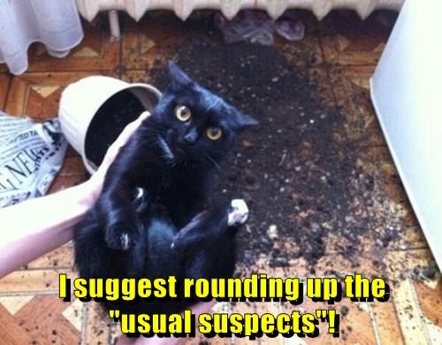 animals captions Cats funny - 8422918400