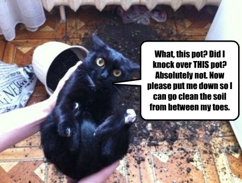 captions Cats funny - 8423080704