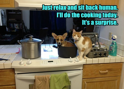 captions Cats funny - 8423417600